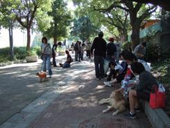 第5回犬一揆野外活動ゴミ拾い