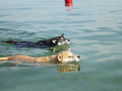 第1回PSD犬一揆琵琶湖合宿
