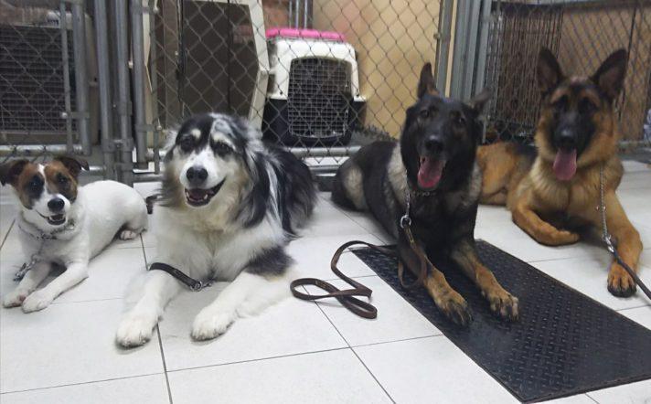 スタッフ犬集合