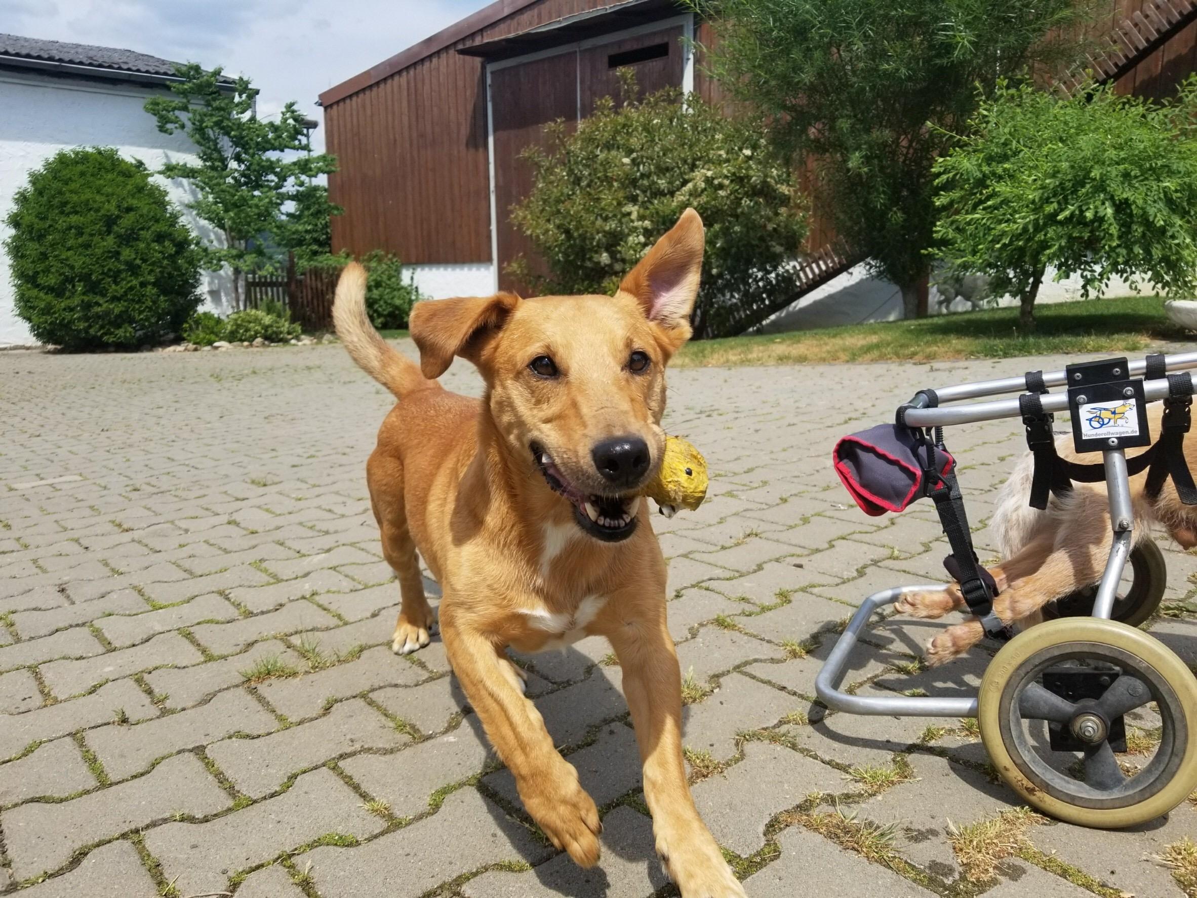 犬のしつけ・教育におやつを使う?使わない?【1】