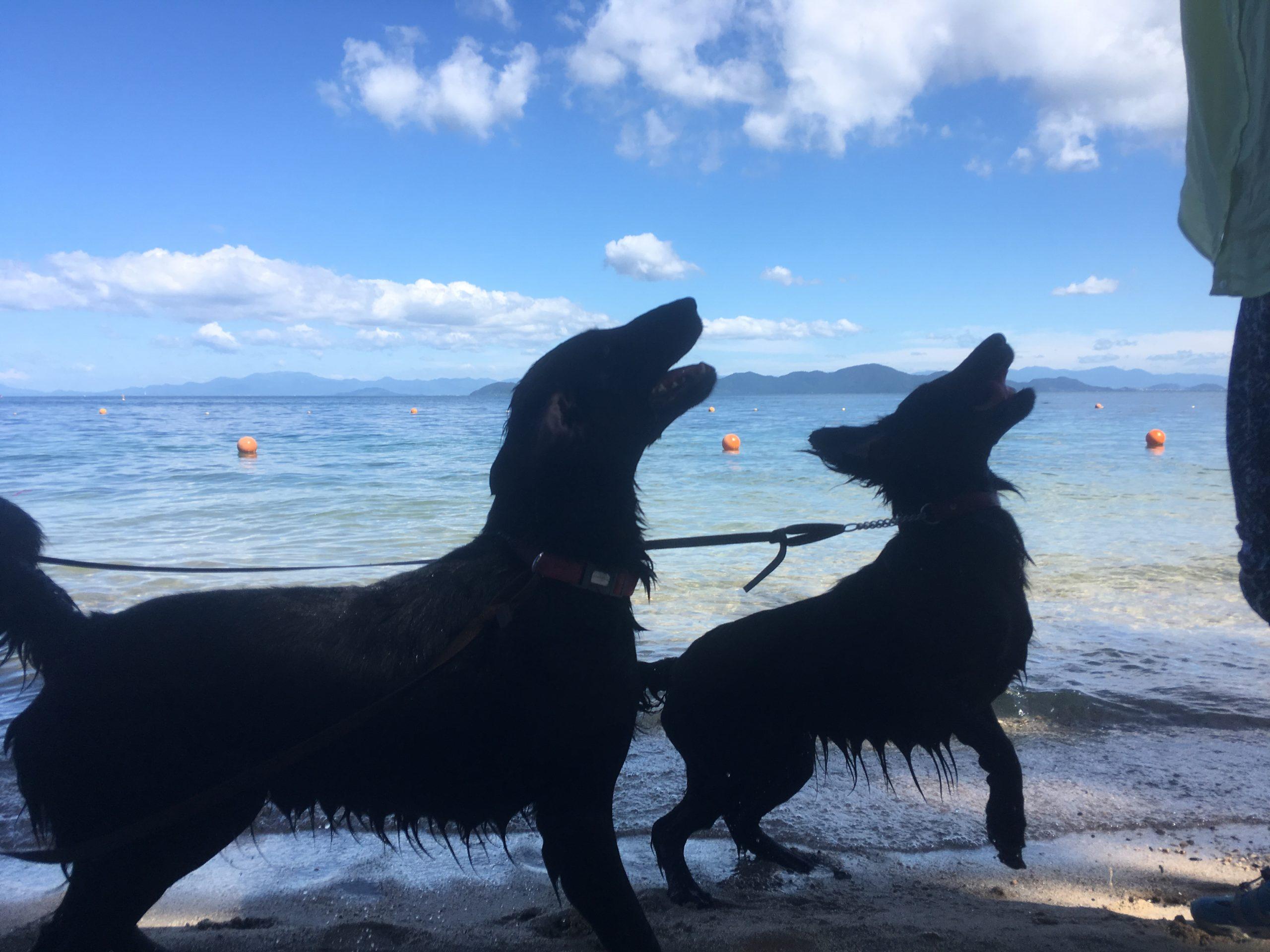 意外な調べ方で分かる、飼いたい犬種の本質【1】
