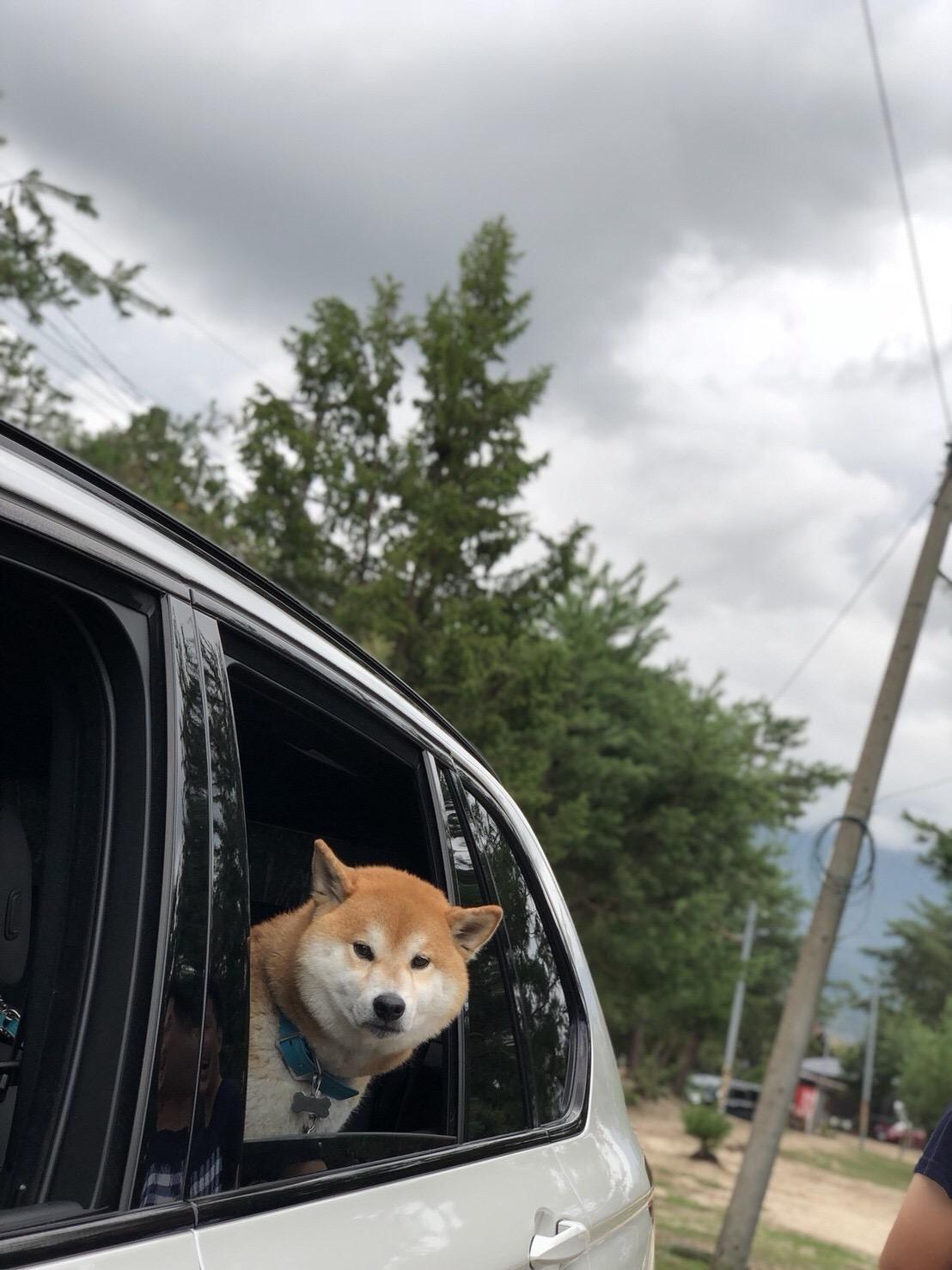 柴犬の性格・注意点【5】