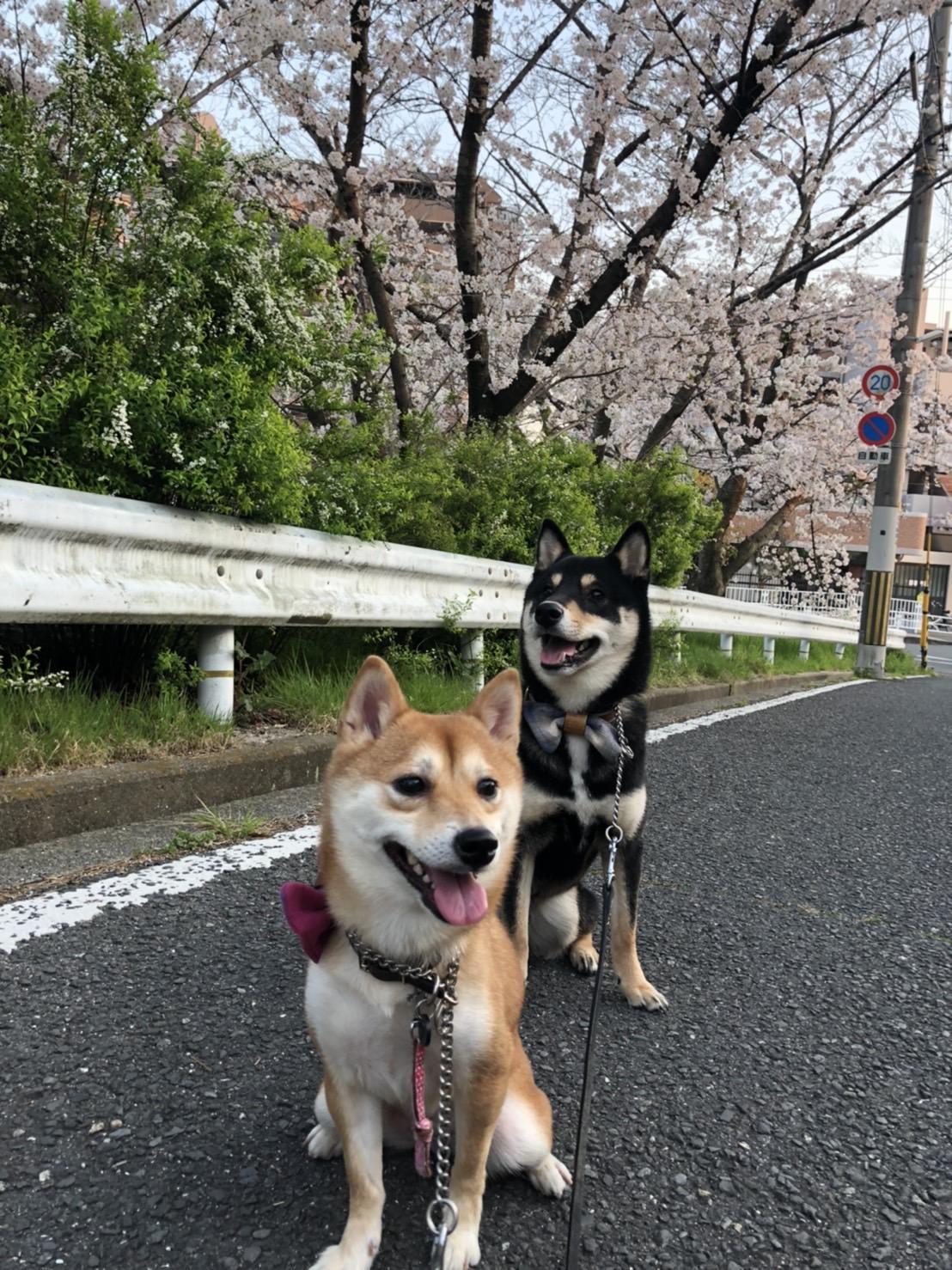 見落としがちな散歩の注意事項【1】