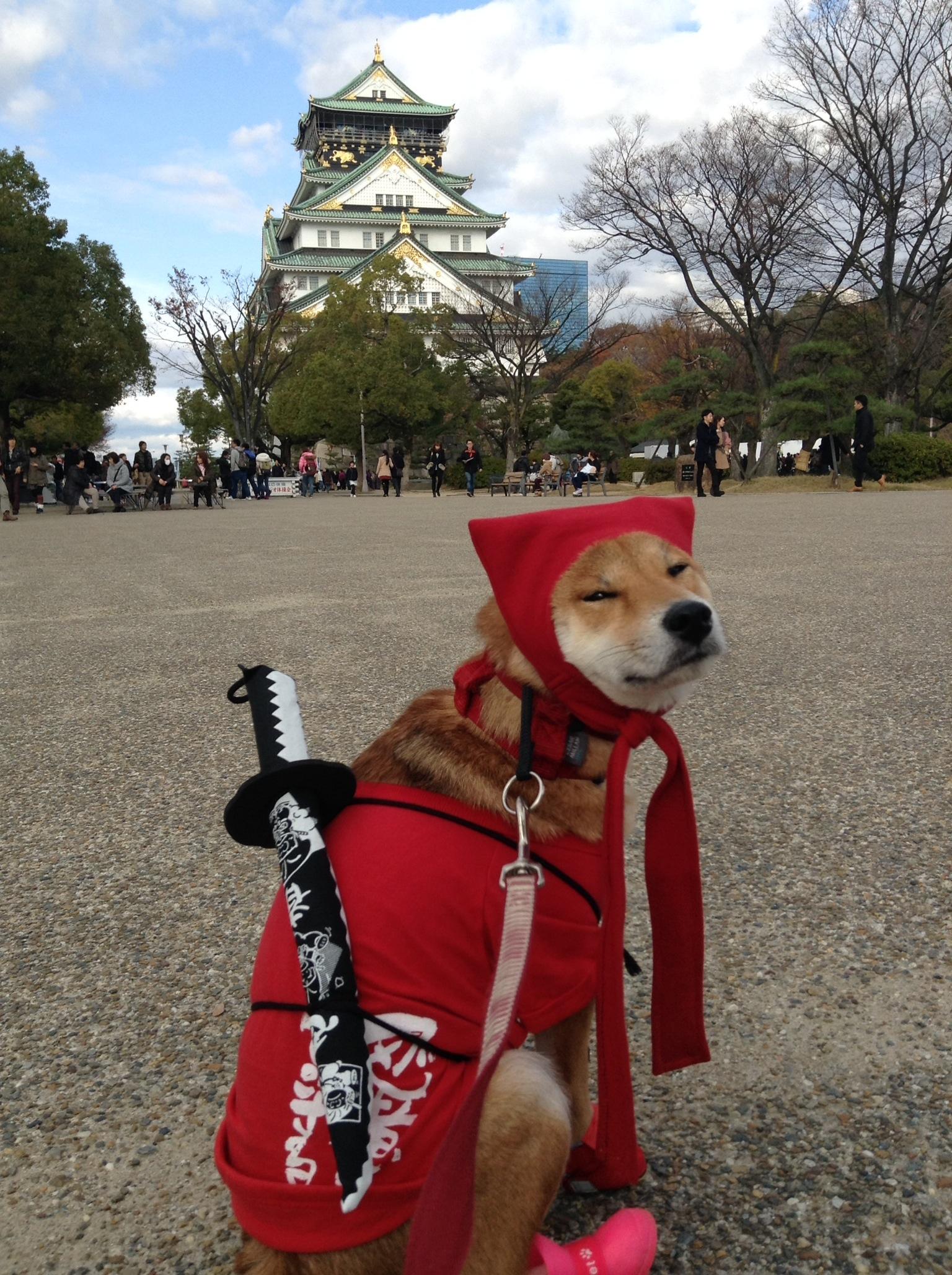 柴犬の性格・注意点【2】