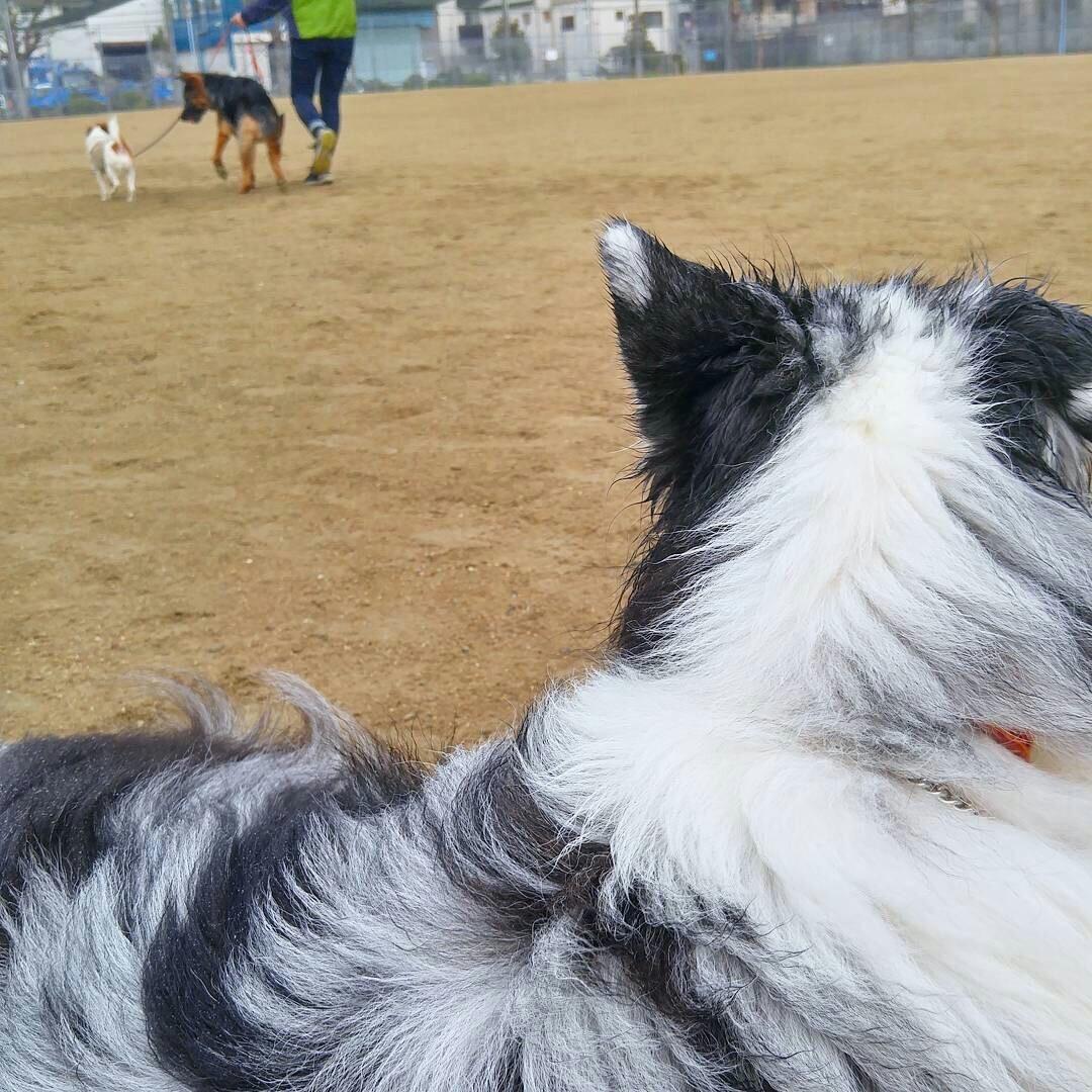 犬と自転車の並走について【4】