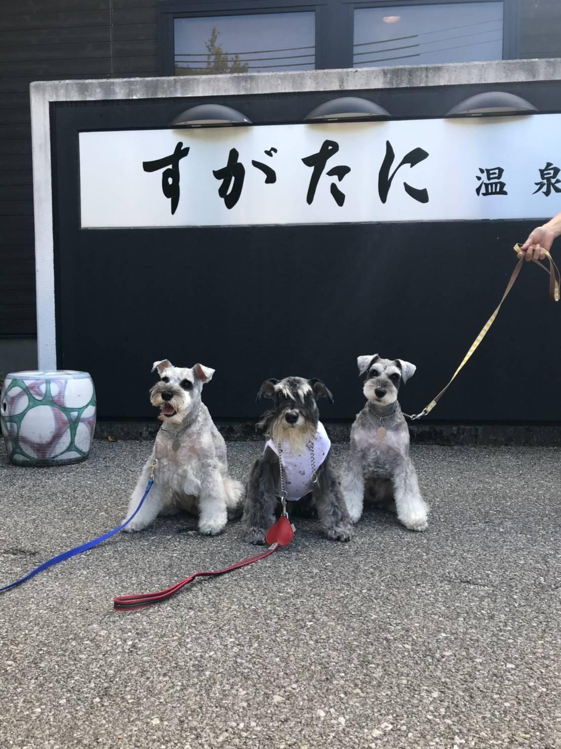 犬と自転車の並走について【2】