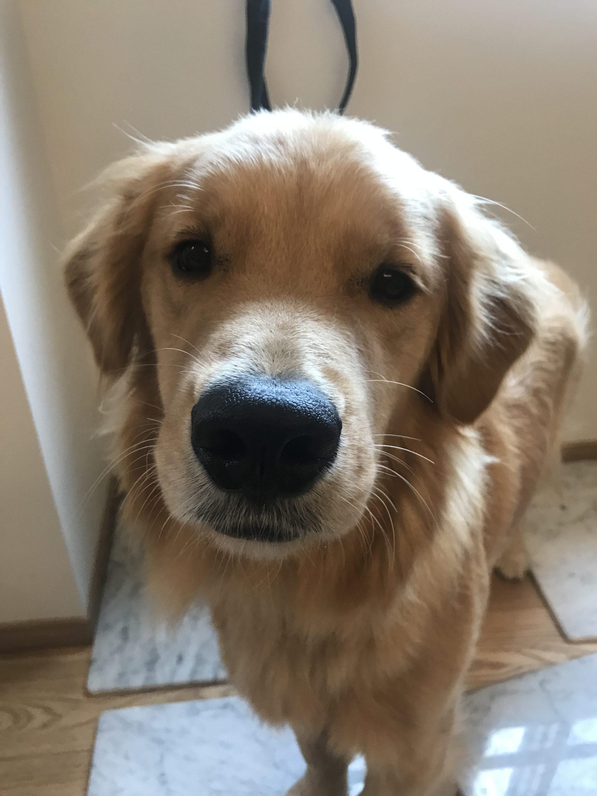 愛犬の緊急時の為にこれだけは準備しておいてください!【2】