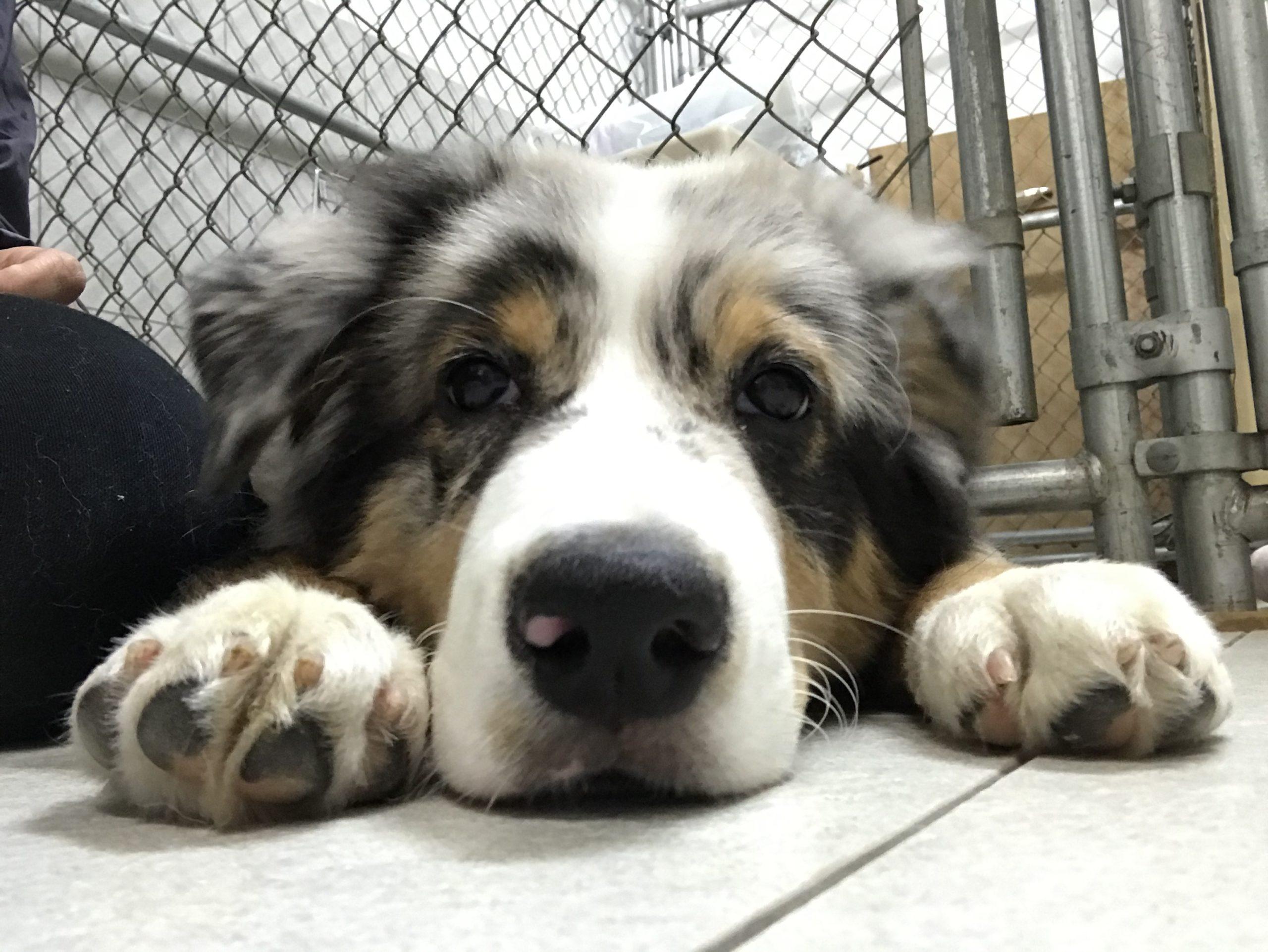 問題を抱える犬にとっての本当の「かわいそう」とは?【2】