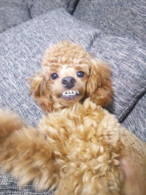 本気噛みをする犬に絶対にしてはいけないアプローチ方法【3】