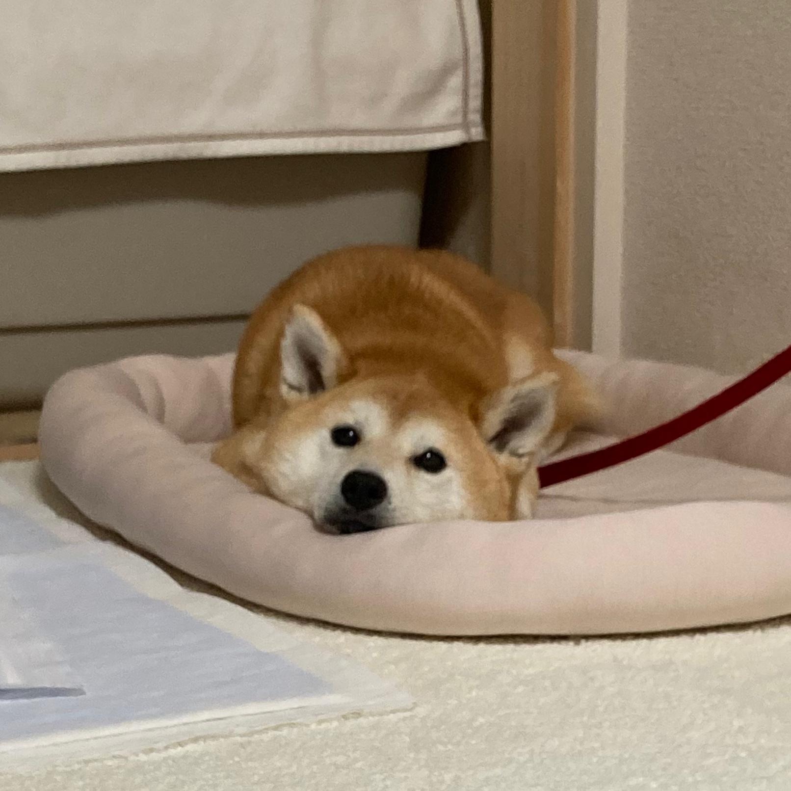 愛犬の問題行動を改善するにあたり覚えておかないといけない事【1】