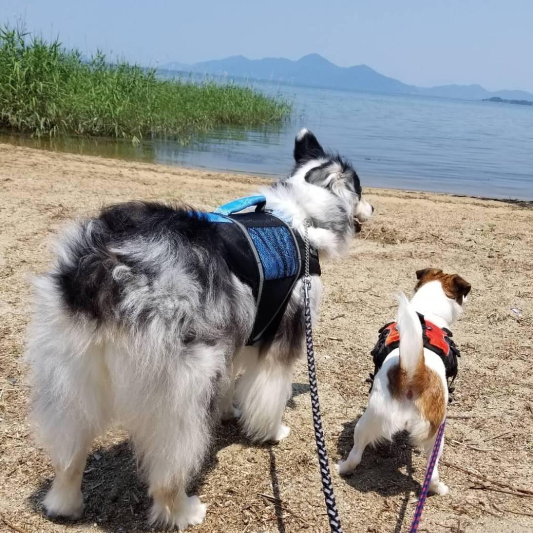 カップルで犬を飼う時の注意点【1】
