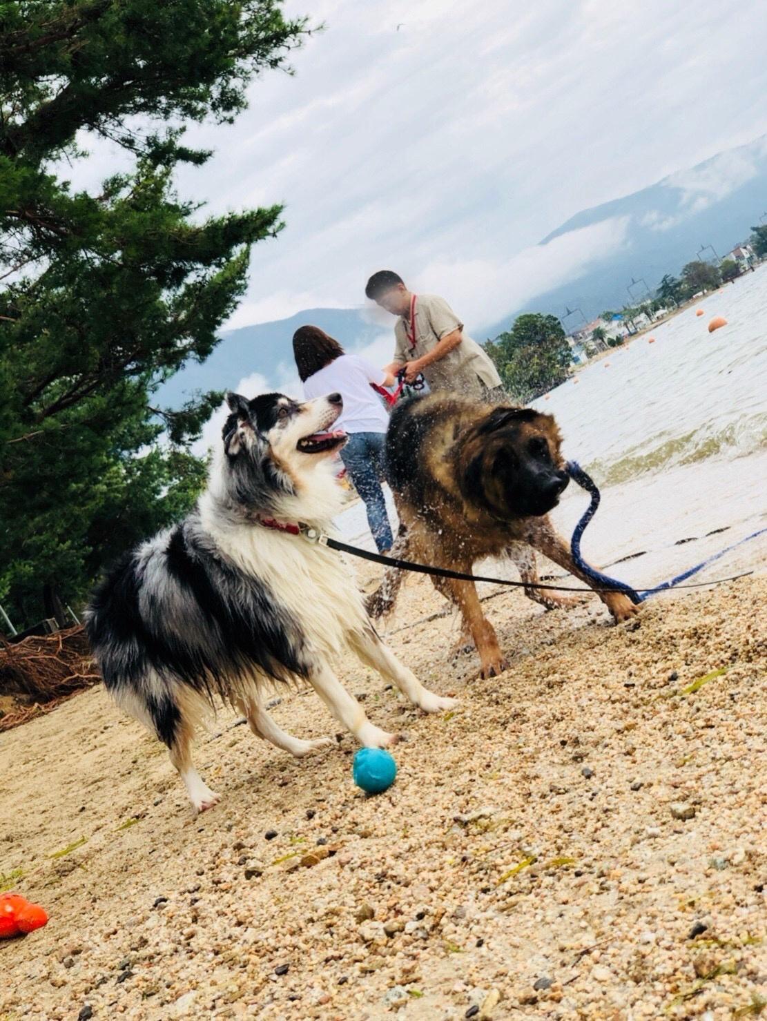 危険な夏から愛犬を守ろう! 暑さ対策・川遊びなどでの注意点【4】